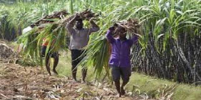 Maharashtra plans to buy sugarcane from Karnataka