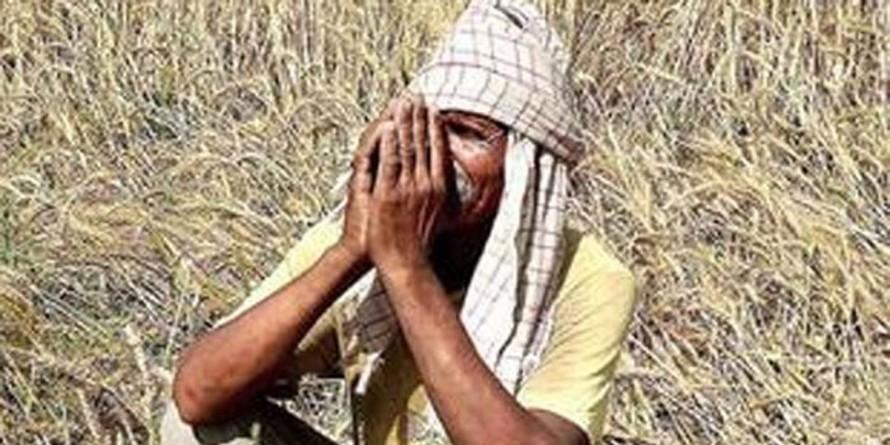 राजस्थान के निराश 'किसानों' की संकटमोचक बनी मोदी सरकार, जानिए कैसे