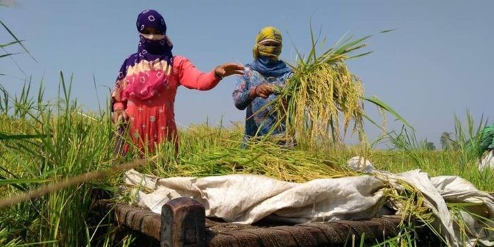 पीएम मोदी द्वारा फसलों के न्यूनतम समर्थन मूल्य बढ़ाने की घोषणा पर धनखड़ ने जताया आभार