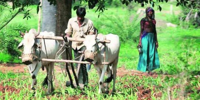 Agricultural operation hit with monsoon playing truant in Odisha