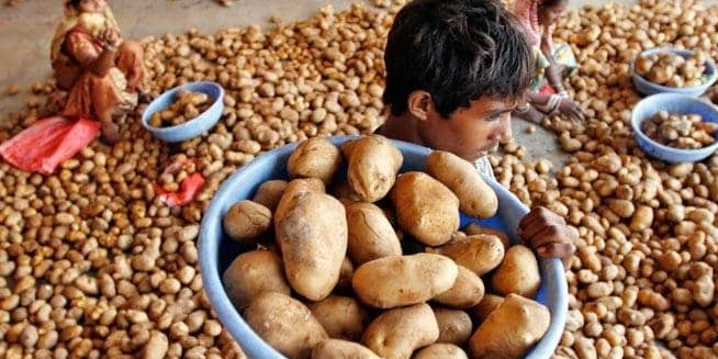 Pepisco drops case against Gujarat potato farmers: Lessons to be learnt by MNC in failed fight with domestic producers