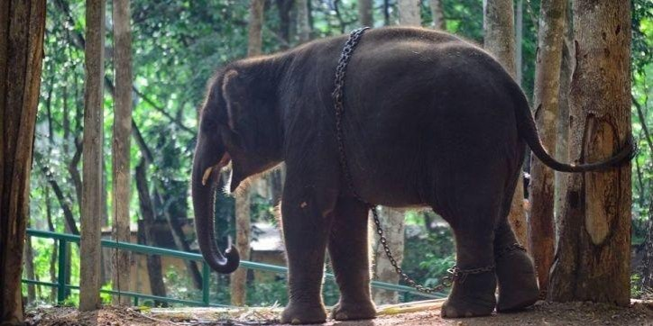 A Home For Gentle Giants: Kerala Gets India's First Ever Elephant Rehabilitation Centre