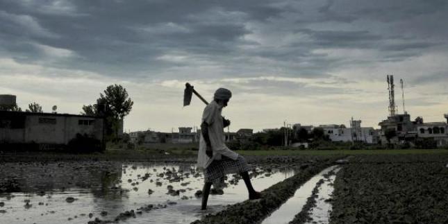 Gujarat sees upsurge in kharif sowing, water storage post heavy rains