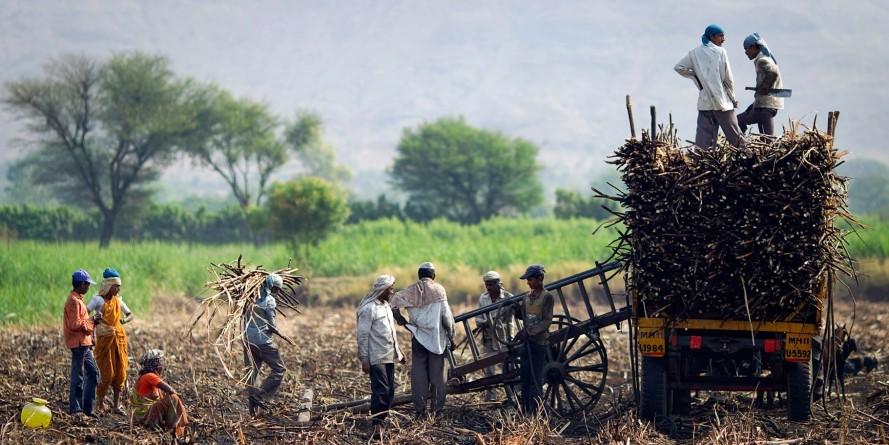 पूर्वांचल के गन्ना किसानों की सुध क्यों नहीं ले रही है सरकार?