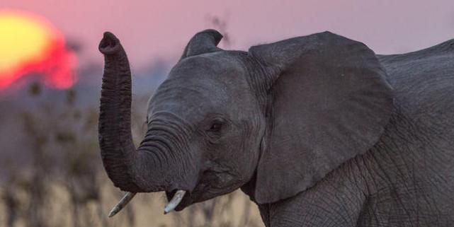 Odisha govt to launch scheme to check elephant deaths