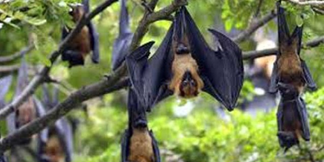 Nipah scare over, says Kerala Health Minister
