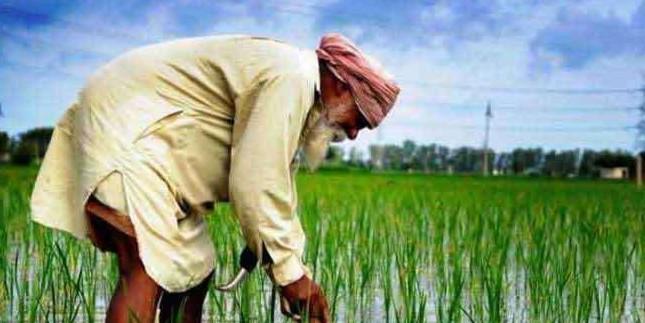 कर्जदार किसानों काे बड़़ी राहत की तैयारी, सरकार उठा सकती है बड़़ा कदम व लाएगी खास स्कीम