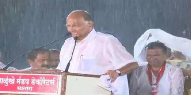 शरद पवार ने भारी बारिश के बीच चुनावी रैली को किया संबोधित, मानी NCP की 'गलती'