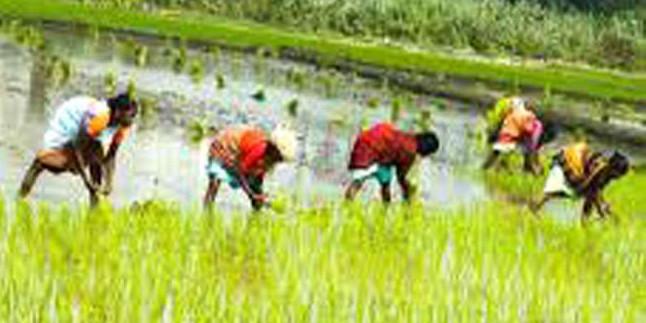 इस साल भी झारखंड में सुखाड़ के संकेत, कई जिलों में शुरू नहीं हुई धानरोपनी