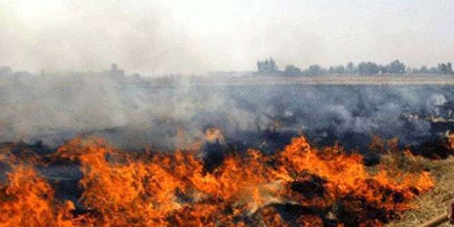 सरकार बोली-29343 किसानों को मुआवजे के 19.9 करोड़ जारी किए