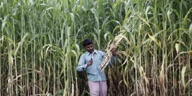 गन्ना किसानों को HC से बड़ी राहत, 15% ब्याज के साथ बकाया भुगतान के आदेश