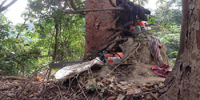 NGT directs Arunachal to take action against illegal logging