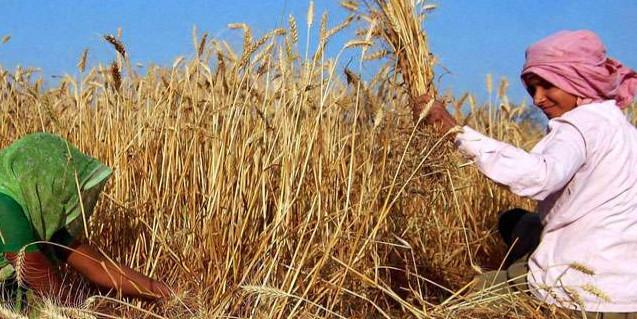 किसानों को मिली बड़ी राहत, 4750 करोड़ रुपये की ब्याज राशि व जुर्माना होगा माफ
