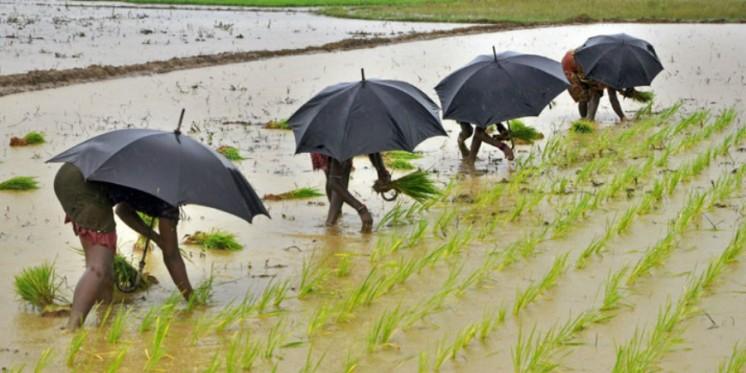 Centre Tells Odisha to Send List of Farmers Under PM-Kisan Scheme