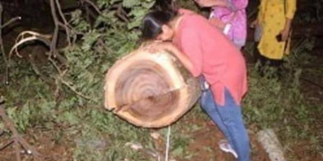 आरे में पेड़ कटने के खिलाफ याचिका, सुप्रीम कोर्ट की स्पेशल बेंच सोमवार को करेगी सुनवाई