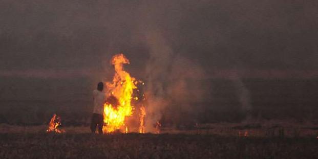 सरकार का बड़ा फैसला: पराली नहीं जलाने वाले किसानों को मिलेगा 2500 रुपये प्रति एकड़ मुआवजा