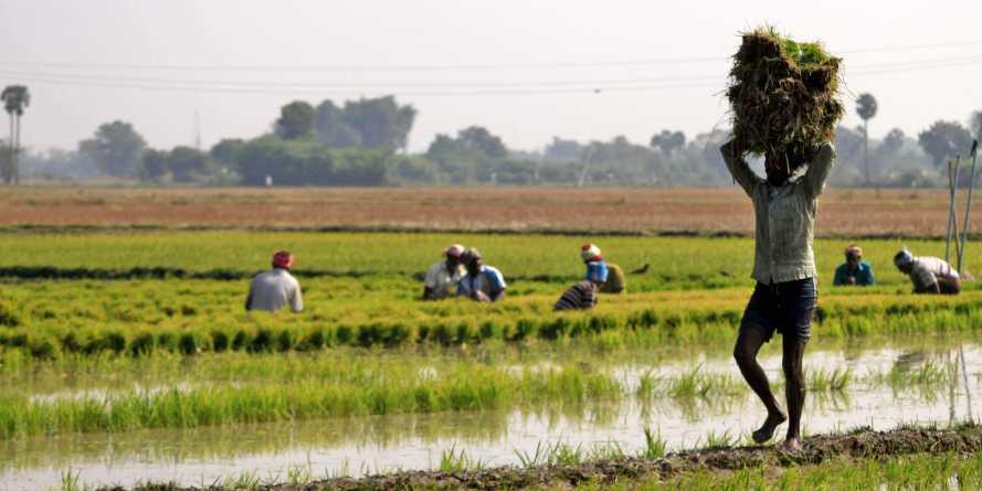 Odisha sends list of 30 lakh farmers for PM-Kisan scheme
