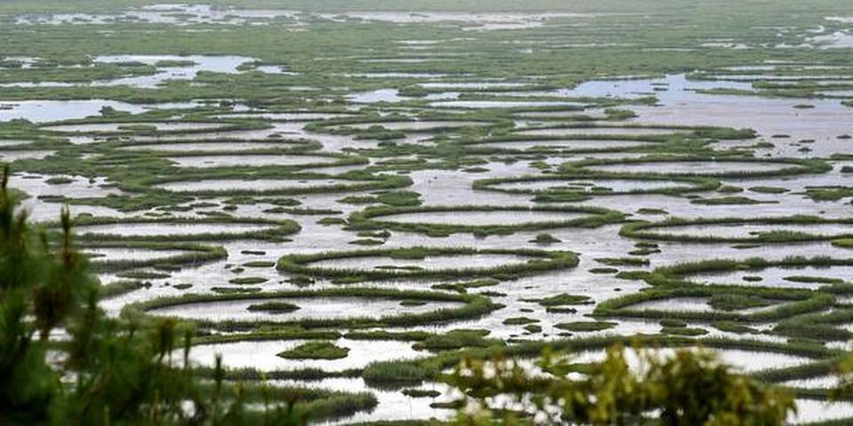 Manipur's floating lake occupants mourn environment loss
