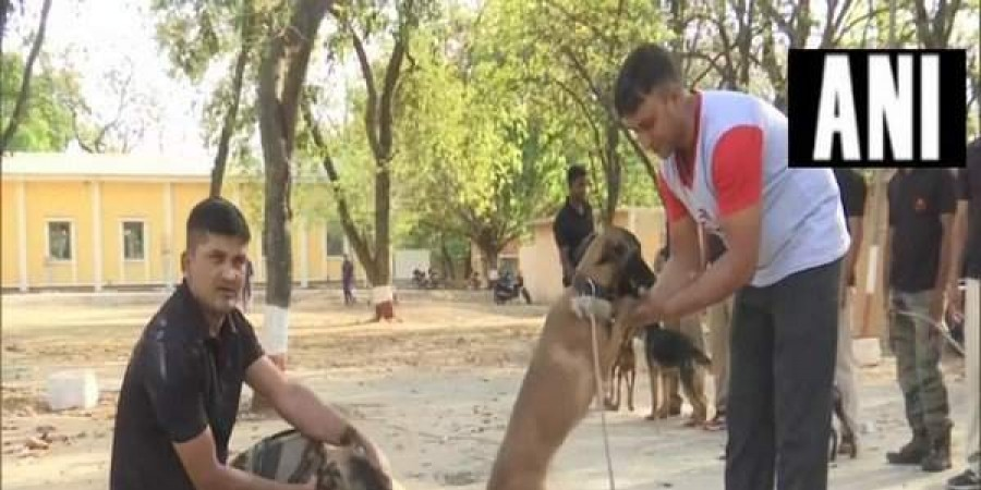 Madhya Pradesh government transfers police dogs and handlers, BJP takes a dig!