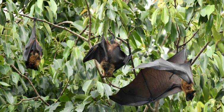Nipah in Kerala: State govt launches search for source of virus; identification may be difficult compared to last year