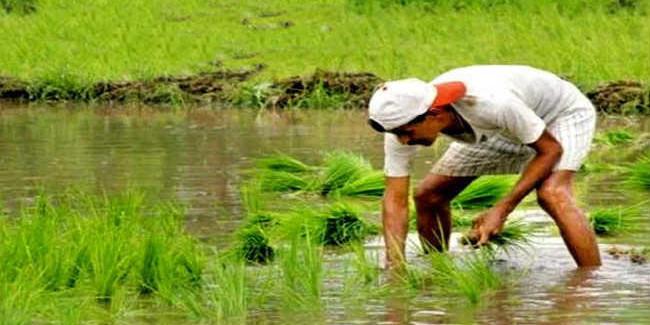 पीएम किसान निधि योजना में 52 लाख से अधिक आवेदन