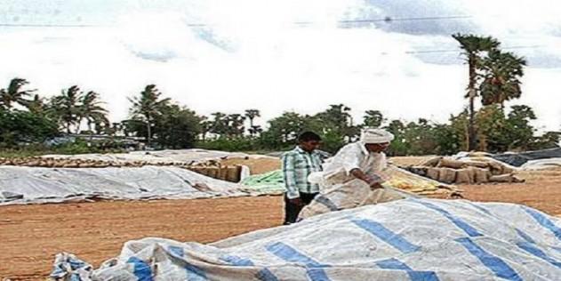 Paddy farmers breathe easy again