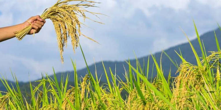 Agriculture productivity 'unacceptably low' in Karnataka: 15th Finance Commission