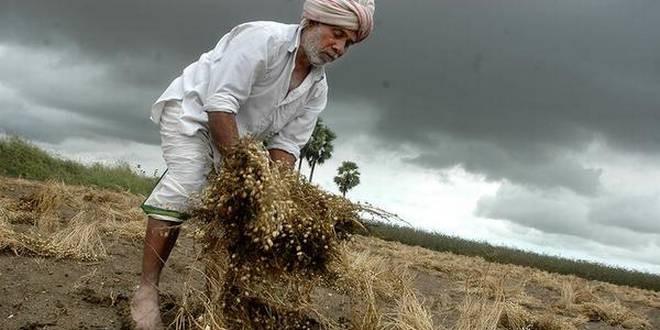 किसानों के लिए मोदी सरकार की नई स्कीम जीरो बजट खेती, जानिए इससे जुड़ी सभी बातें